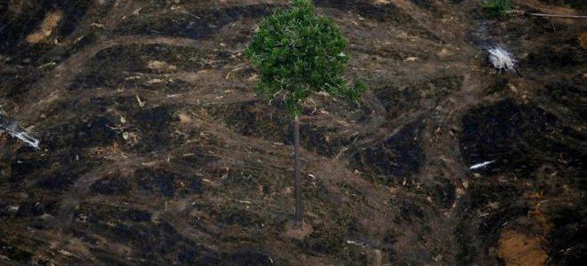 ALERTA VERMELHO! No desmatamento atual, a Amazônia acaba em até 30 anos