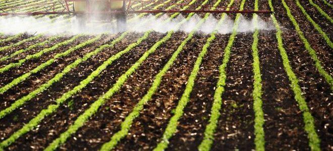 MAMATA: O julgamento do STF que pode acabar com R$ 6 bilhões em subsídios para agrotóxicos